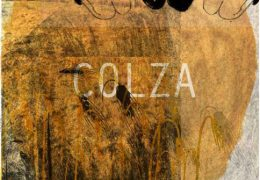 Visuel Colza copyright